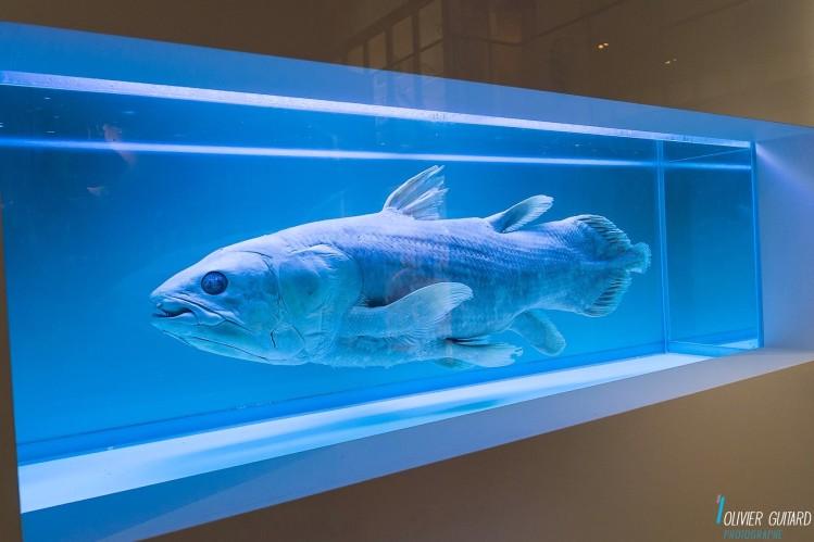 poisson-zoologie_museum-nantes