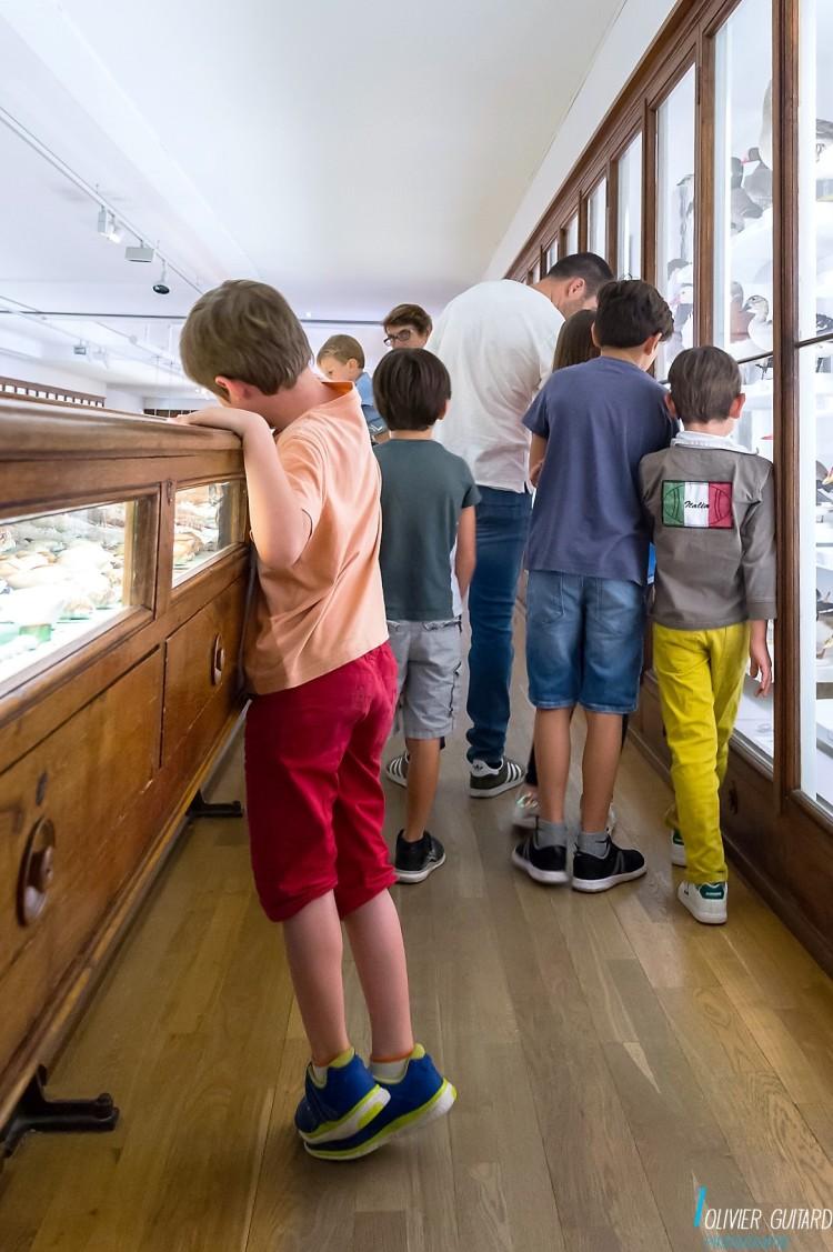 zoologie2_museum-nantes