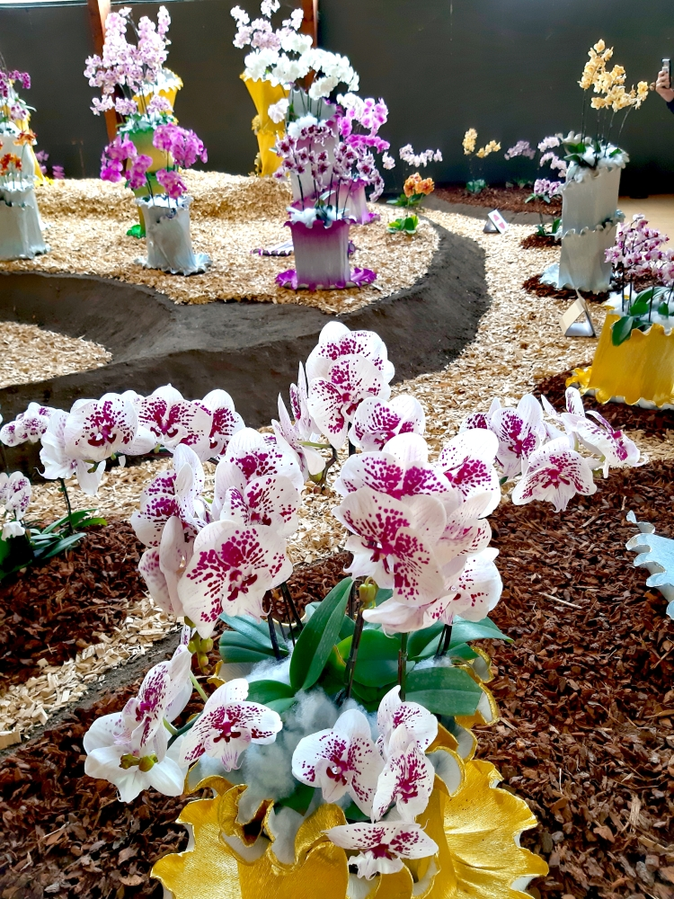 Lespetitesjoiesdelavienantaise_Floralies2019_Sagesse2
